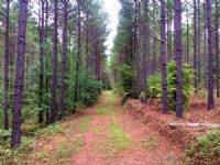 Cherokee Pines : Centre : Cherokee County : Alabama