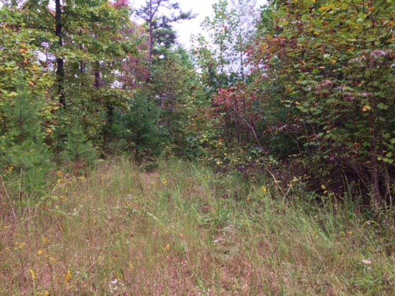 5+/- Wooded Lot W/ Possible Views : South Pittsburg : Marion County : Tennessee
