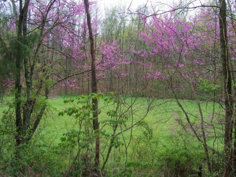 Recreational / Farming : Cohutta : Whitfield County : Georgia