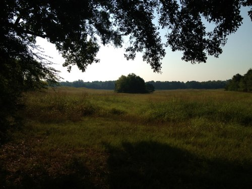 22.94 Ac Pasture & Scattered Trees : Pelahatchie : Rankin County : Mississippi