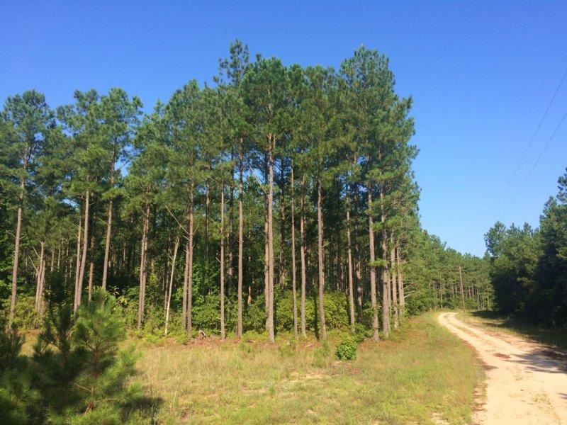 Goodwood Timberlands : Branchville : Southampton County : Virginia