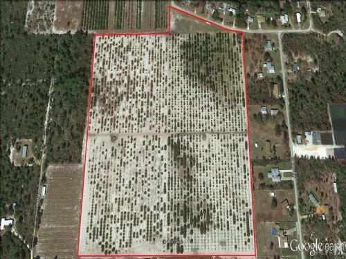 21.± Ac Grove With Development Opp. : Sebring : Highlands County : Florida