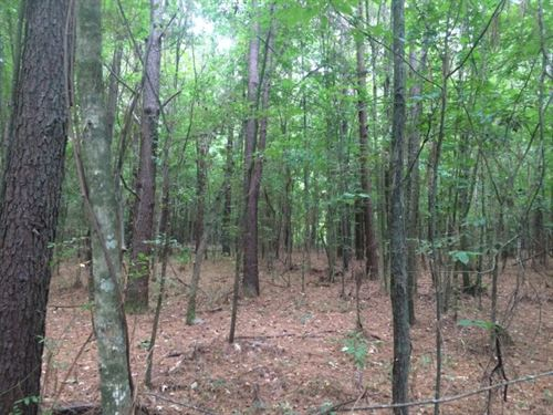 Timberland, Hunting Land For Sale : Morton : Scott County : Mississippi