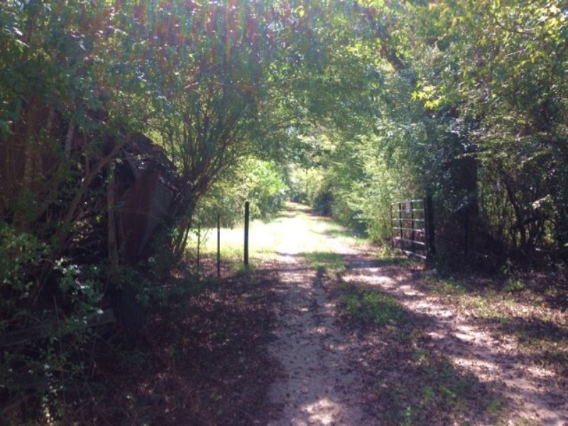 63.00 Acres Recreation Land, Timber : Foxworth : Marion County : Mississippi