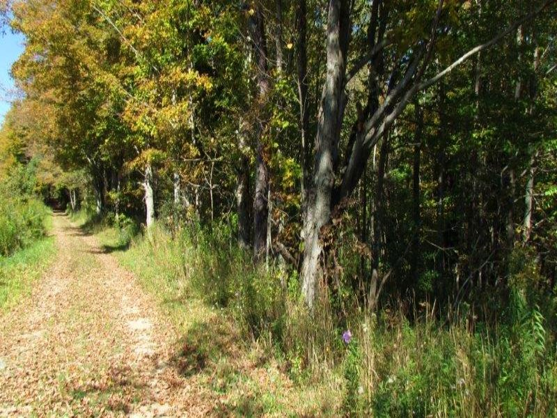 Hunting Land Private 64 Acres : Taylor : Cortland County : New York