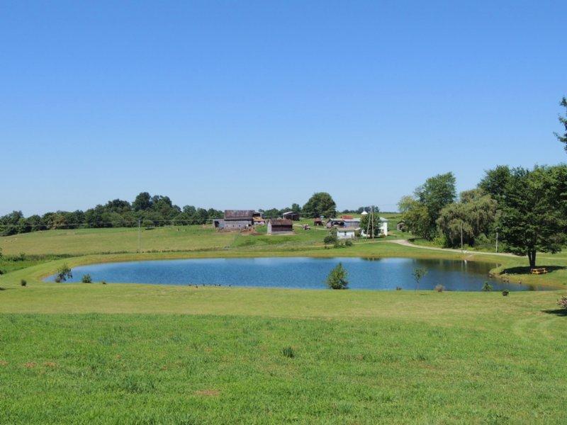 Freeport Rd - 35 Acres : Piedmont : Guernsey County : Ohio
