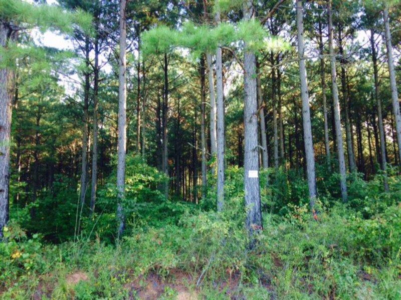 6 +/- Wooded Acres, Buchanan : Buchanan : Haralson County : Georgia