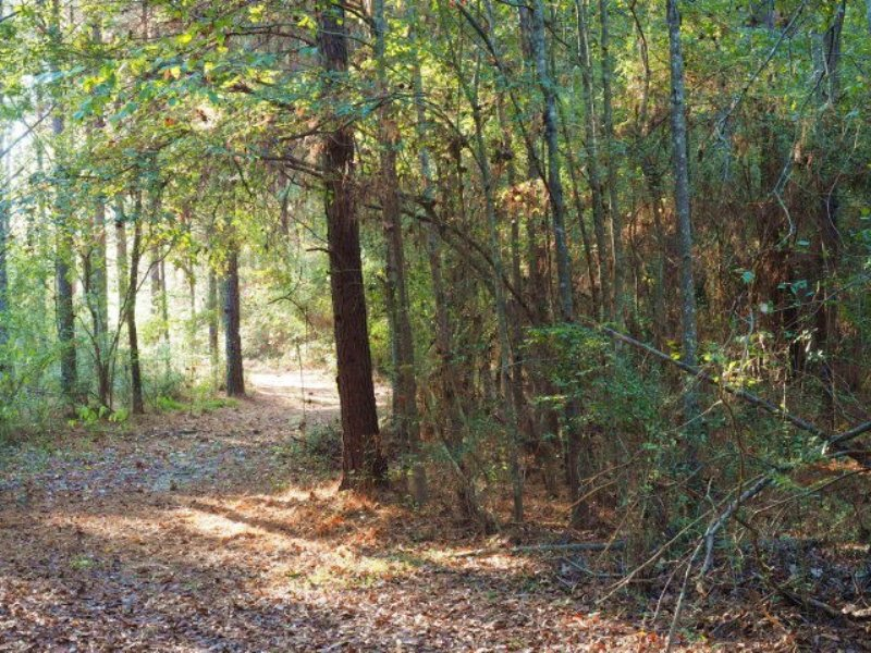 87.50 Acres Hunting Land, Timber : Summit : Pike County : Mississippi
