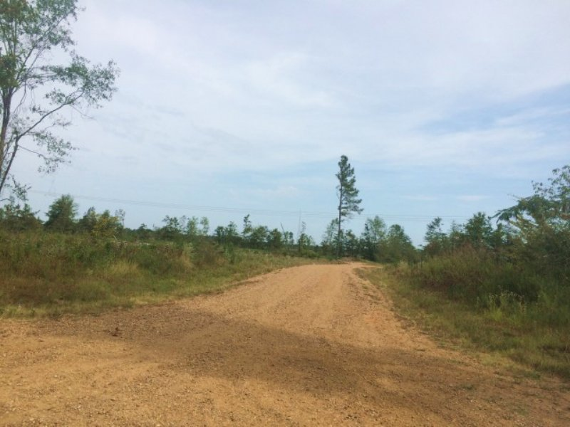 395.00 Acres Hunting Land, Timber : Leesburg : Rankin County : Mississippi