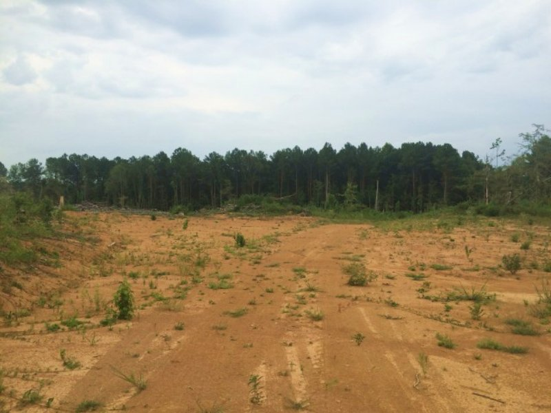 149.60 Acres Hunting Land, Timber : Carthage : Madison County : Mississippi