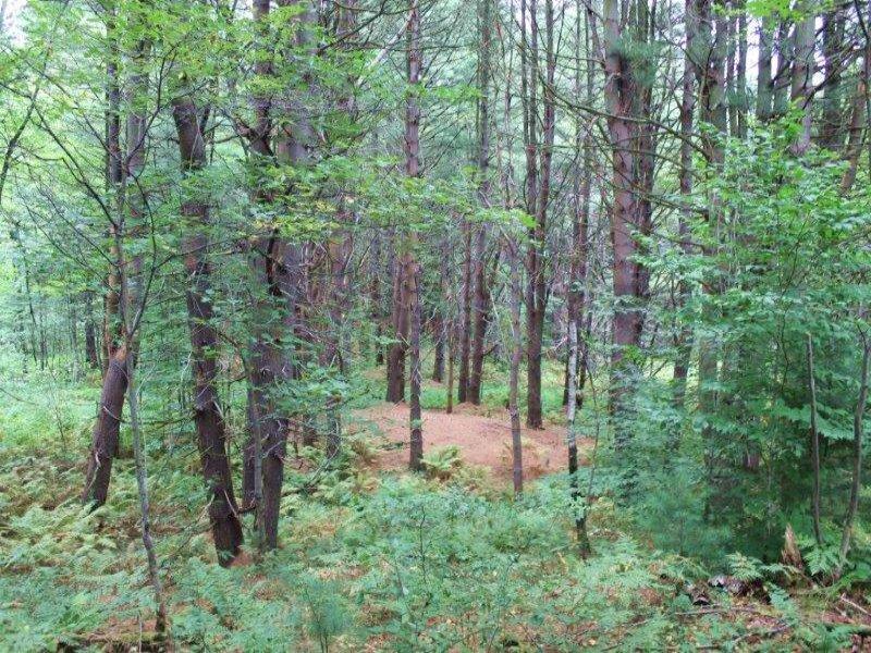 Hunting Land Near State Land 14 Ac : Amboy : Oswego County : New York