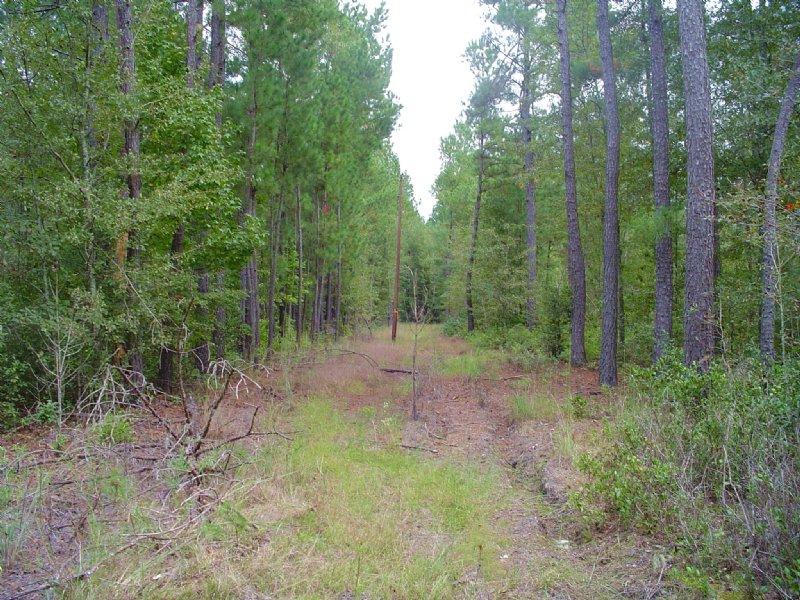 Log Cabin Tract : Walterboro : Colleton County : South Carolina