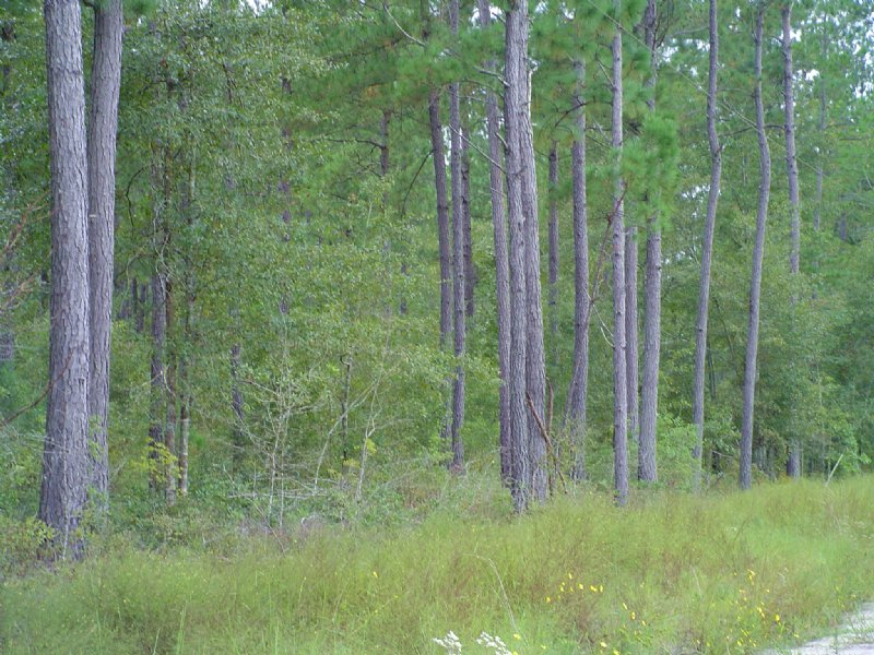 Mt. Carmel Tract : Walterboro : Colleton County : South Carolina