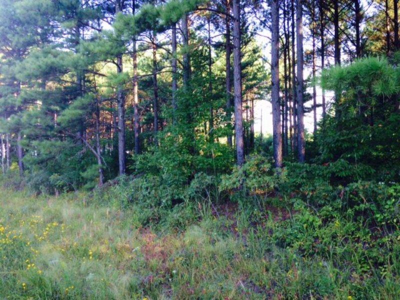 21 +/- Wooded Acres, Buchanan : Buchanan : Haralson County : Georgia