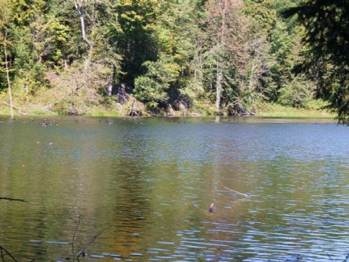 Waterfront Land On Owl Pond 18 Ac : Hermon : Saint Lawrence County : New York