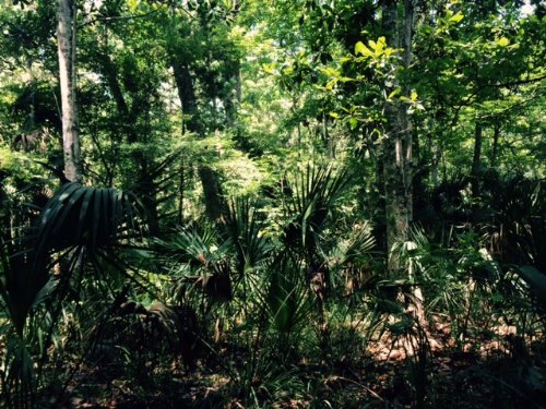 10.5 Acres For Sale : Brooksville : Hernando County : Florida