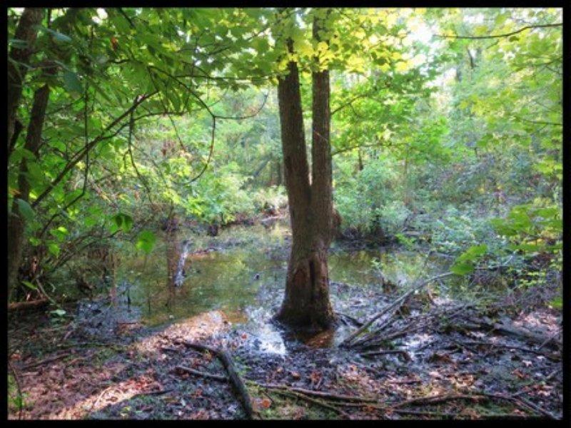 53.33 Acres Hunting Land : Carthage : Leake County : Mississippi