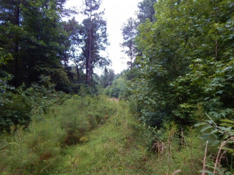 96.1 Acres In Carroll County : Black Hawk : Carroll County : Mississippi