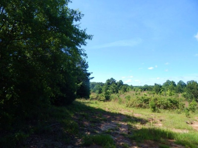 133.00 Acres Agriculture Land : Port Gibson : Claiborne County : Mississippi