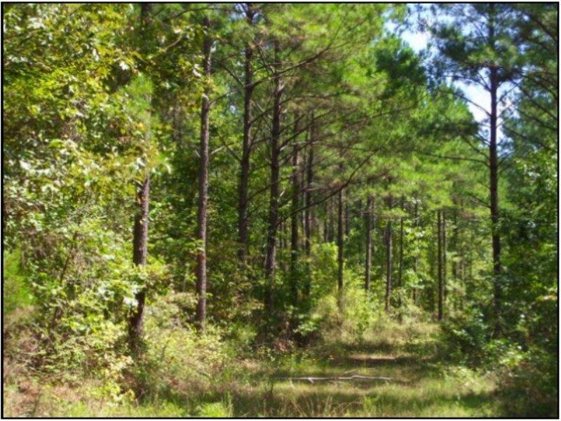 376.00 Acres Recreation Land : Philadelphia : Neshoba County : Mississippi