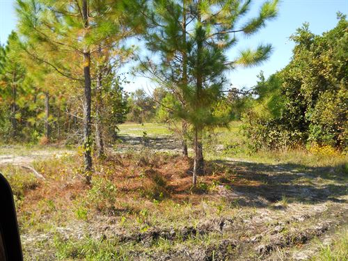 Hunting Land Vendor Finance Avail : Perry : Taylor County : Florida