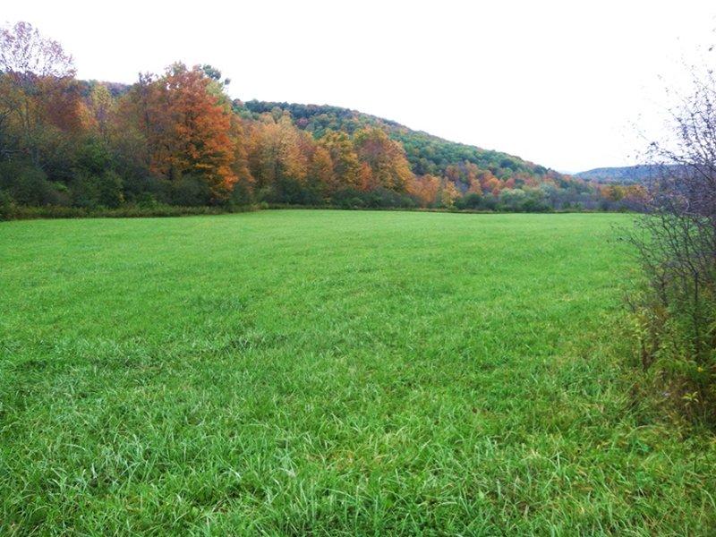 Farmland Hunting Land Near Forest : West Almond : Allegany County : New York