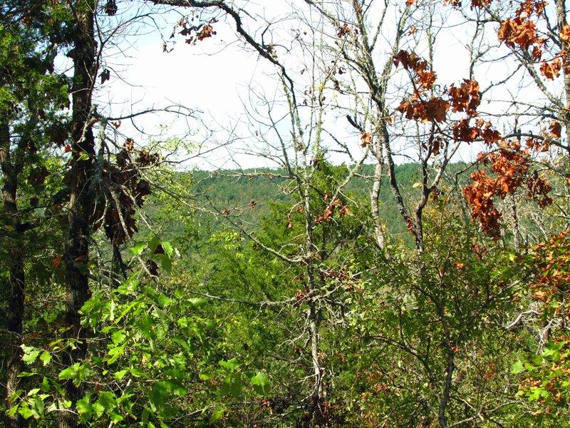 Medicine Springs Tract 8 : Finley : Pushmataha County : Oklahoma