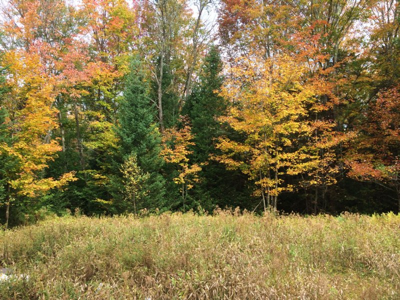 Ready To Build Recreational Land : Russia : Herkimer County : New York