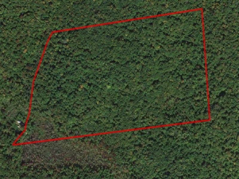 40 Acres Of Privacy And Hunting : Salisbury Center : Herkimer County : New York