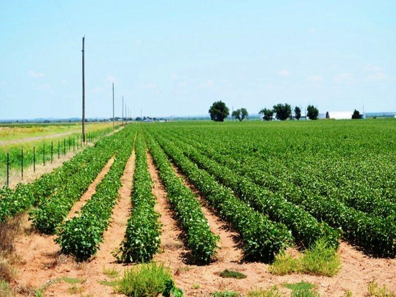 27+ Tx Farms, Ranches & Investment : Vernon : Wilbarger County : Texas