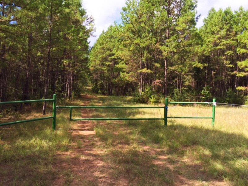 90 Acres Fm 323 : Alderbranch : Anderson County : Texas