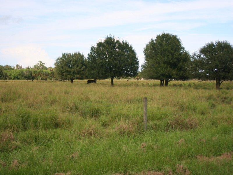 30ac Rural Estate Homesite : Fort Pierce : Saint Lucie County : Florida