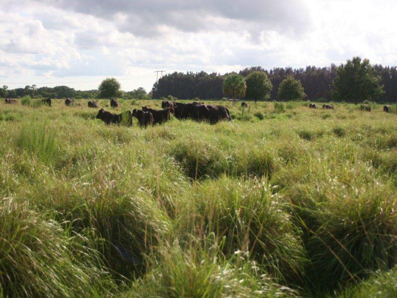 96ac Fenced Pasture / Homesite : Fort Pierce : Saint Lucie County : Florida