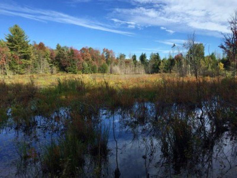 On Mellon Pond : Amboy : Oswego County : New York