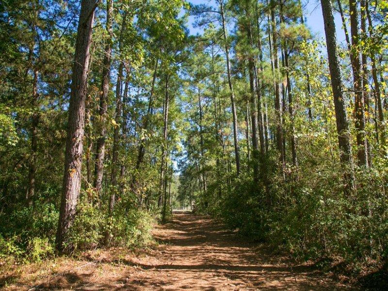 3.5 Acres Fm 1374 : New Waverly : Walker County : Texas