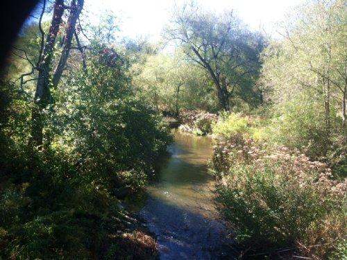 117 Acres Hunting Creek Woods : Prattsburgh : Steuben County : New York