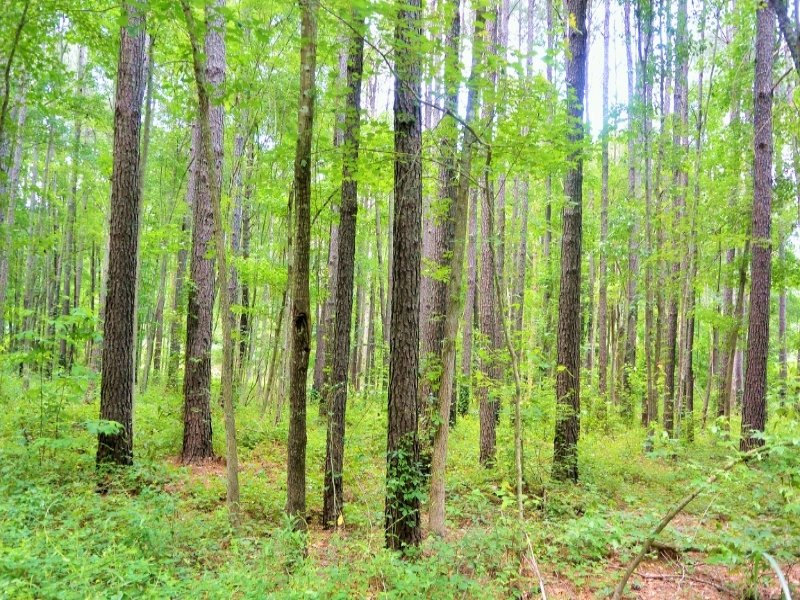 National Forest Homesite : Jamestown : Berkeley County : South Carolina