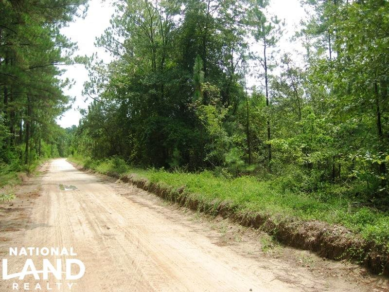 Wagener Residential Homesite With T : Wagener : Aiken County : South Carolina