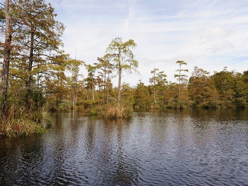 Lake Shiloh Woods : Bladenboro : Bladen County : North Carolina