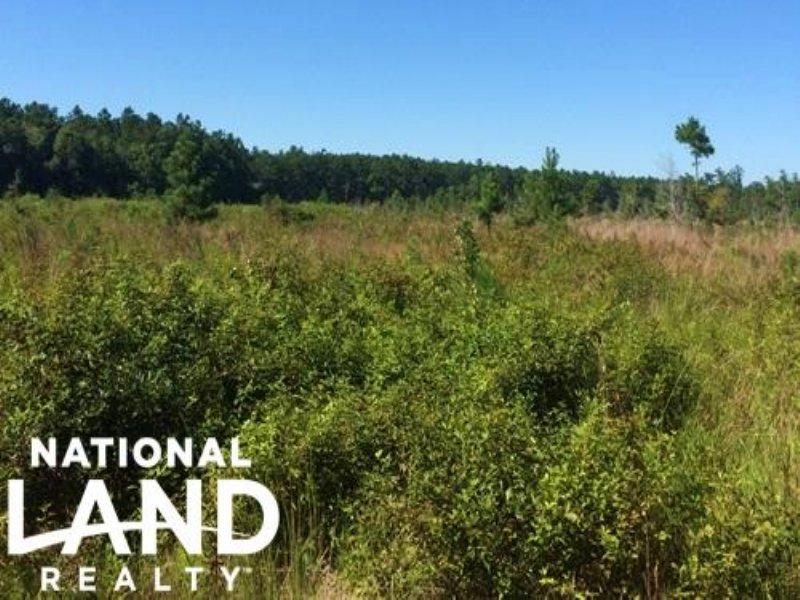 Large Bonneau Recreational Homesite : Bonneau : Berkeley County : South Carolina