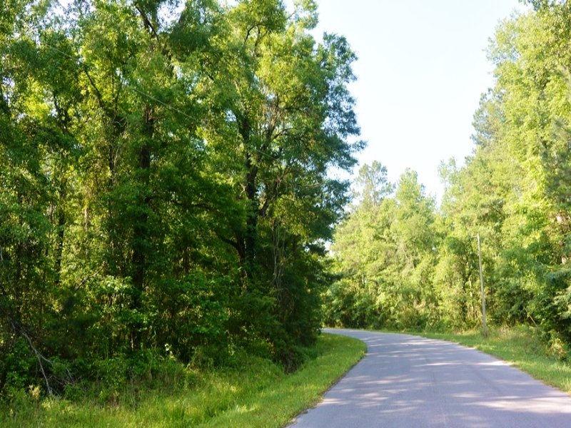 Country Wooded Homesite : Harleyville : Dorchester County : South Carolina