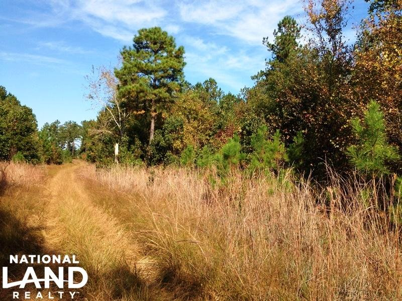 Timber Investment & Recreational Ho : Brooklet : Bulloch County : Georgia