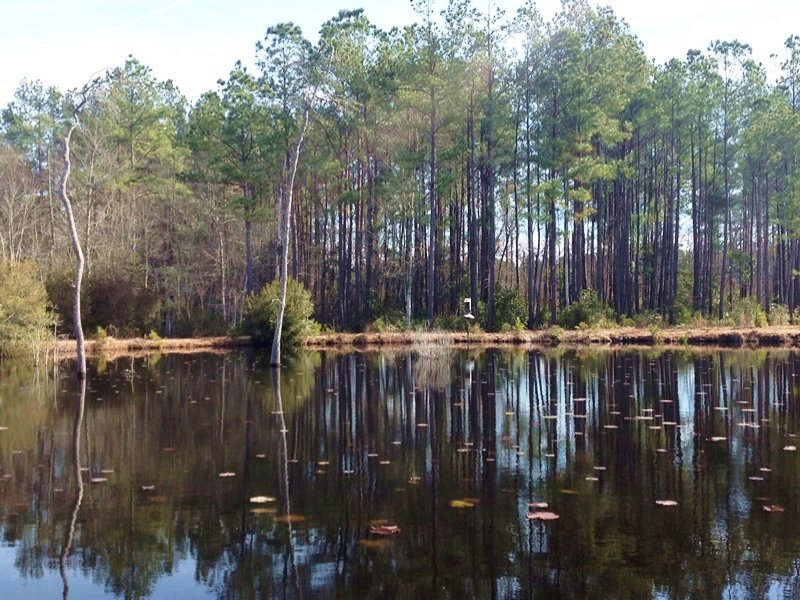 Hunting Tract With Pond : Hemingway : Georgetown County : South Carolina