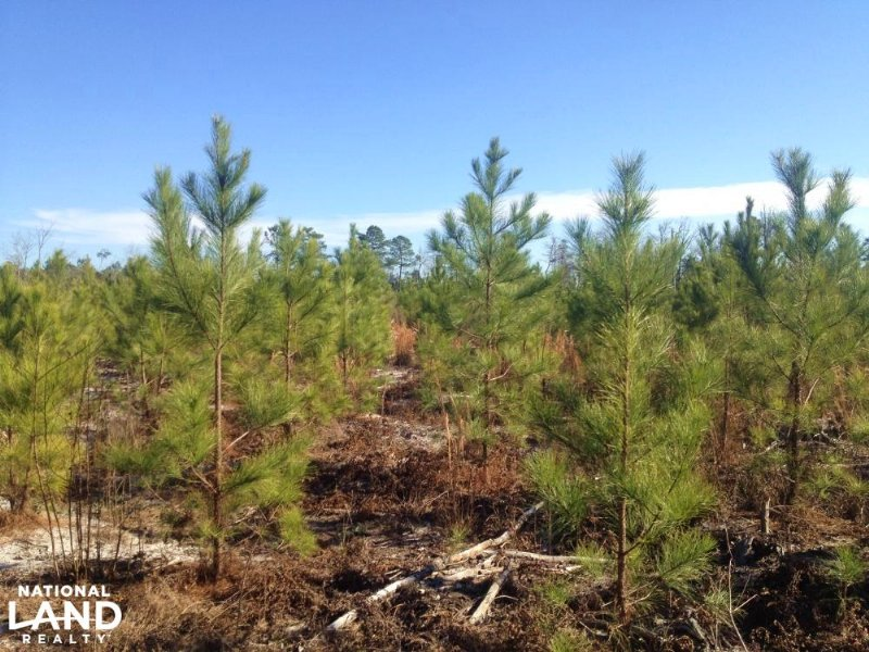 Receational Timber Investment : Nichols : Horry County : South Carolina