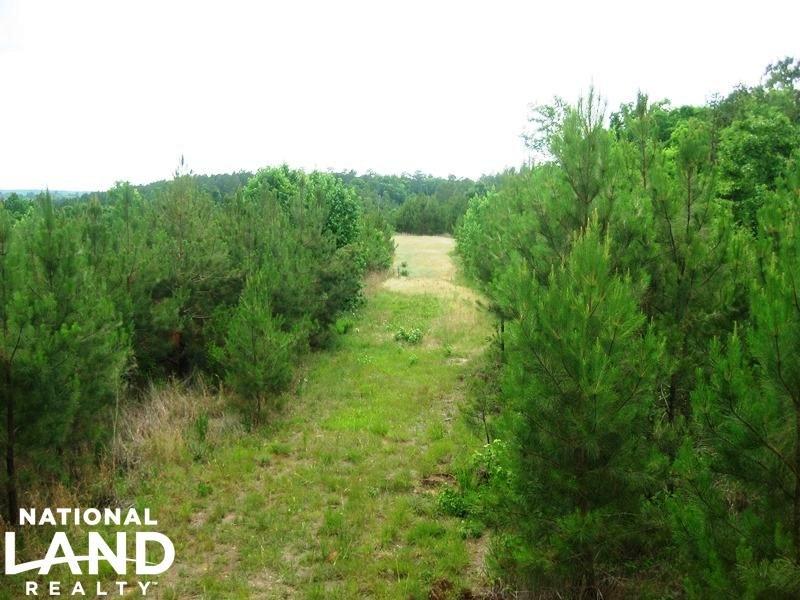 Winnsboro Recreational Timberland : Winnsboro : Fairfield County : South Carolina