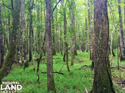 Turbeville Hunting Land : Turbeville : Clarendon County : South Carolina