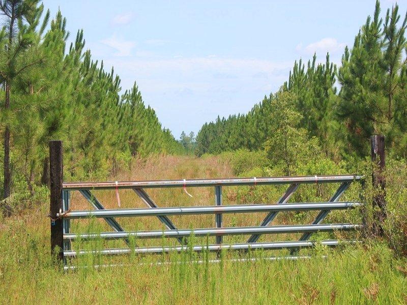 Timber Investment & Recreational La : Folkston : Charlton County : Georgia