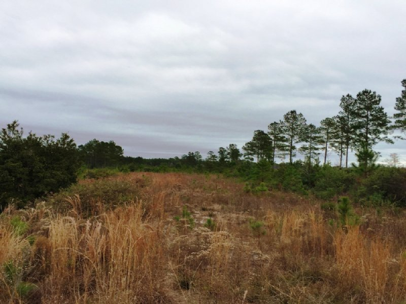 Highway 1 Commercial Land : Folkston : Charlton County : Georgia