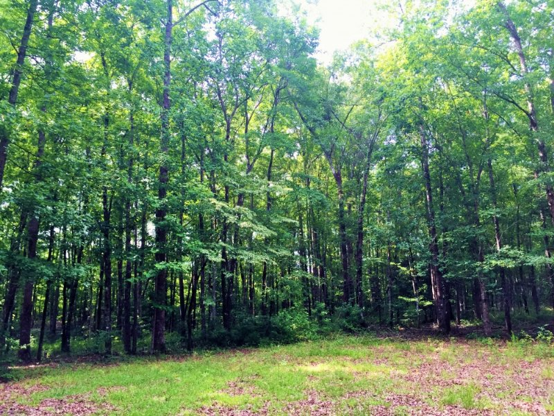 Summerville Wooded Homesite : Summerville : Berkeley County : South Carolina