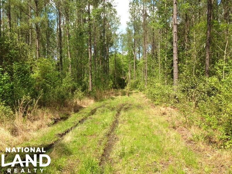 Hunting & Timber Tract With Cabin : Hortense : Glynn County : Georgia